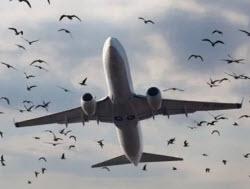 самолет птицы